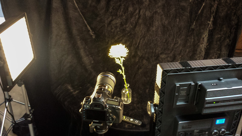 This was a quick cell phone snap of the setup I used for the flower gallery images this week.  You can see that I not only brought extra light to the scene, but I also had my camera on a tripod and I used a remote to trigger the camera to avoid bumping the camera when I pushed the shutter button.