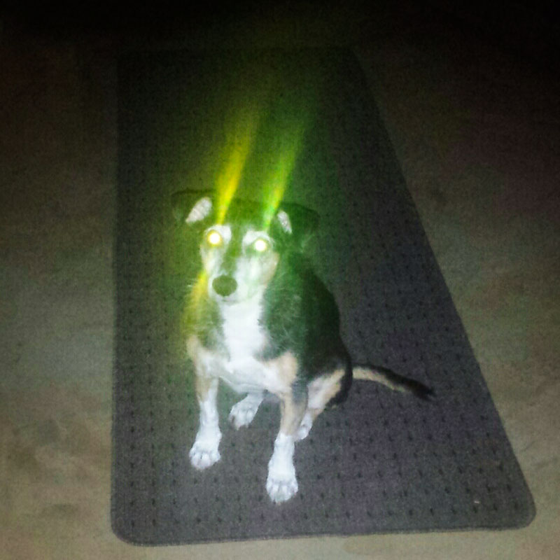Because lots of light can make your dog look demonic.