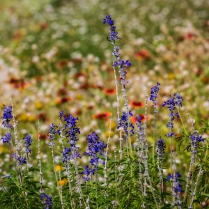 m_kloth_wildflowers_7713